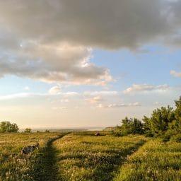 A meadow outside.